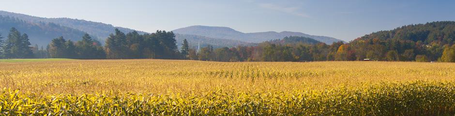 vermont-corn-field-2